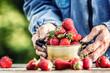 Leinwandbild Motiv Farme's hands hold an old kitchen pot full of fresh ripe strawberries