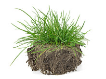 Green Grass, Soil And Grass Isolated On White Background.