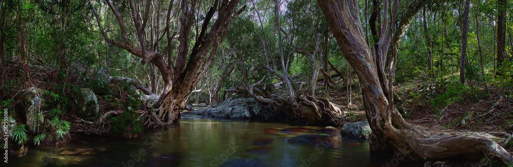 Fototapeta A wonderful tropical creek runs between mysterious curved trees and boulders. Davies Creek National Park , Upper Davies Creek and Dinden National Park. Far North Queensland, Australia. Image.