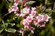 Blumenbusch