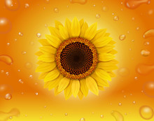 Realistic Sunflower On Yellow Background With Sunflower Oil Drops