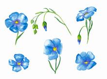 Flax Flowers Elements.