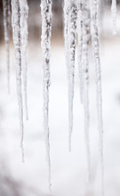 Long Thin Icicles. Close-up