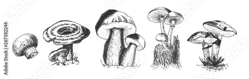 Obraz Set of edible wild forest mushrooms - fototapety do salonu