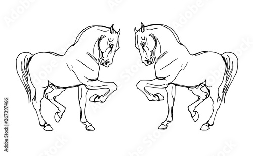 Foto op Aluminium Doe het zelf vector isolated image of two prancing white heavy horses on white background