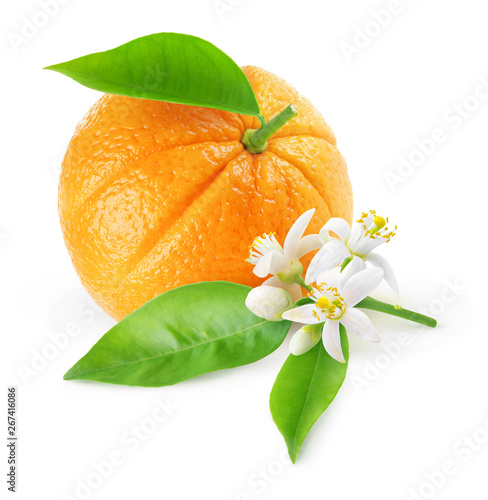 Isolated orange fruit and flowers. One fruit and branch with orange tree blossoms isolated on white background with clipping path