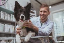 Happy Healthy Dog Being Examin...