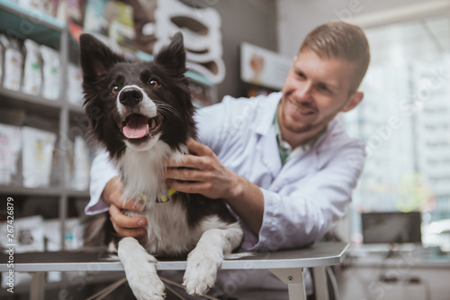 plakat Happy healthy dog being examined by professional veterinarian, copy space. Cheerful handsome male vet doctor smiling at the dog after medical examination