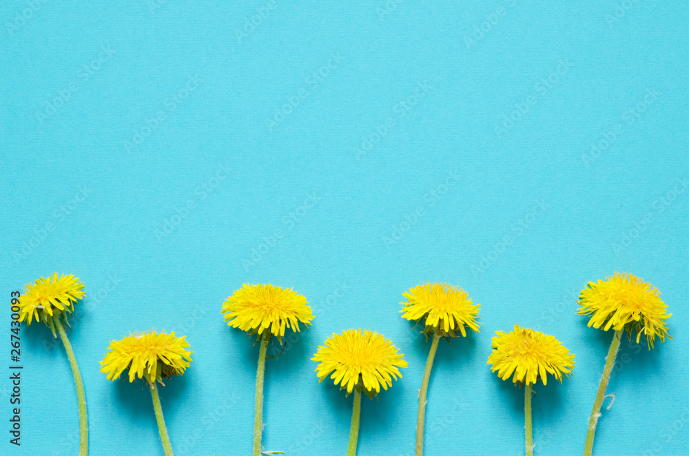 Fototapety, obrazy: Flowers composition. Yellow flowers of dandelions on white background. Top wiev. - Image