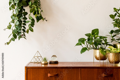 Nice and retro space of home interior with  vintage cupboard with elegant gold accessories, a lot of plants in stylish pots Tapéta, Fotótapéta