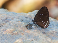 Butterflies Are Living On Rocks