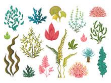 Seaweeds. Underwater Ocean Pla...