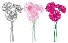 Set Of Bouquet With Outline Three Gerbera Or Gerber Flower In Pastel Pink And Black Isolated On White Background.