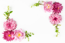 Beautiful Pink Flowers On White Background.