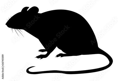 Obraz na plátně Motif noir d'un rat sur fond blanc