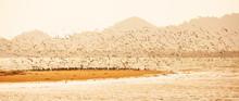 Panorama View, Shorebirds Migr...