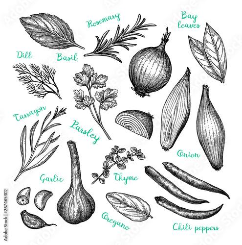 Fototapeta  Ink sketch of cooking ingredients.