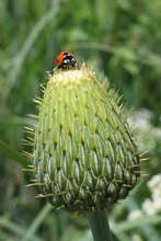 Closeup Of A Ladybug Climbing ...