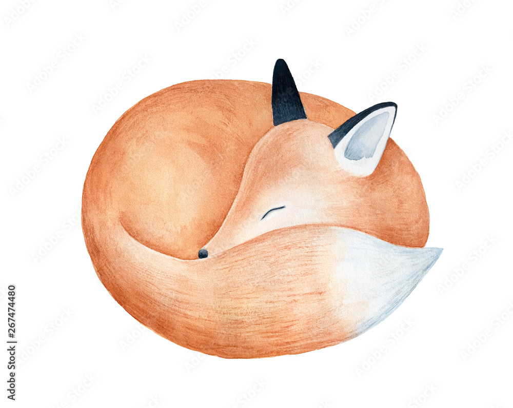 Fototapeta Cute fluffy sleeping fox character watercolor illustration. Symbol of cleverness, intelligence, charm, beauty, protection. Handdrawn water color graphic drawing, cutout element for design decoration.