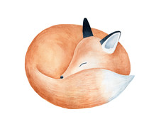 Cute Fluffy Sleeping Fox Chara...