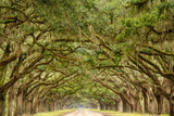 Fototapeta Sawanna - Tunnel of Live Oak Trees in Savannah, Georgia