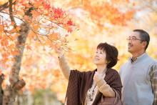 紅葉を眺めるシニア夫婦
