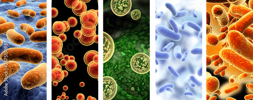Valokuvatapetti Set of vertical banners with pathogenic bacterias and viruses