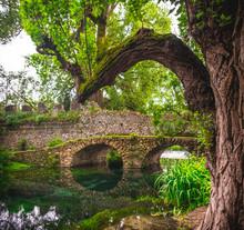 Fantasy River Bridge Tree Trunk Branch