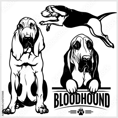 Bloodhound dog - vector set isolated illustration on white background Fototapet