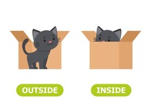 Kitten Inside The Box And Outs...
