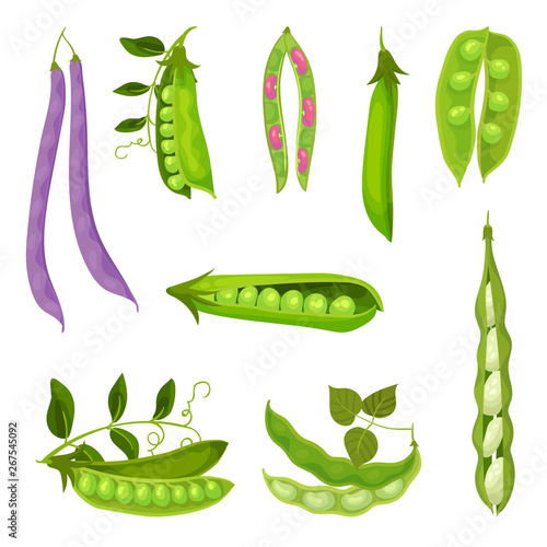 Cuadros en Lienzo Collection of different images of pea pods and beans
