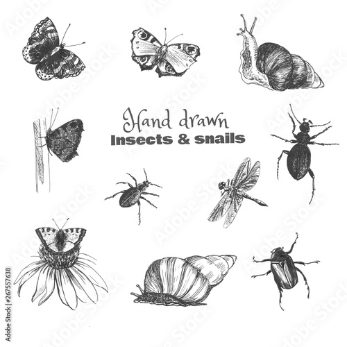 Photo sur Toile Papillons dans Grunge Hand drawn insects. Black-white sketch set of butterflies and beetles, isolated on white.