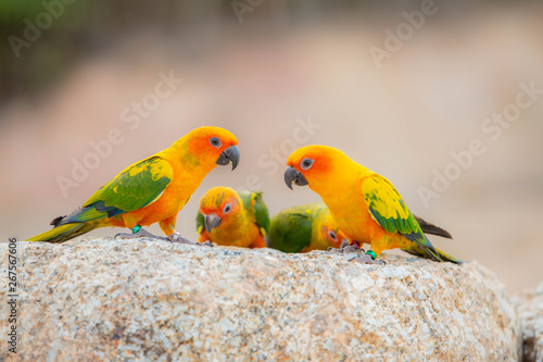 Photo Canine parrot and cute bird