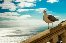 Seagull On A Background Of Clo...