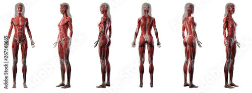 Fotografia 3d rendered medically accurate illustration of a womans muscle system
