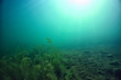 canvas print picture underwater green landscape / nature underwater eco ecology lake, wild diving