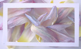 vintage tinted petals background / abstract spring background, summer flower petals in frame