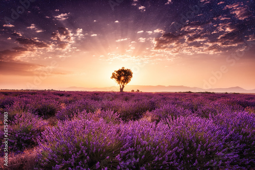 Keuken foto achterwand Ochtendgloren Amazing nature landscape, lavender field with single tree in sunrise glow with night dark starry sky, natural summer travel background, Provence, France