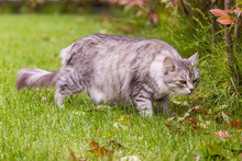 Curious Beauty Cat With Long H...