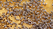The Concept Of Beekeeping, The Texture Of A Honeycomb Cell, On Which The Bees Move And Work. Back Ground