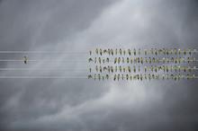 Individuality Concept, Birds O...