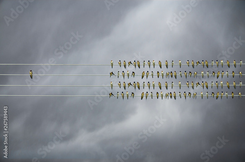 Foto op Canvas Bleke violet Individuality concept, birds on a wire, alone against mass