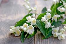 Beautiful, Fragrant White Flowers - Jasmine Flower