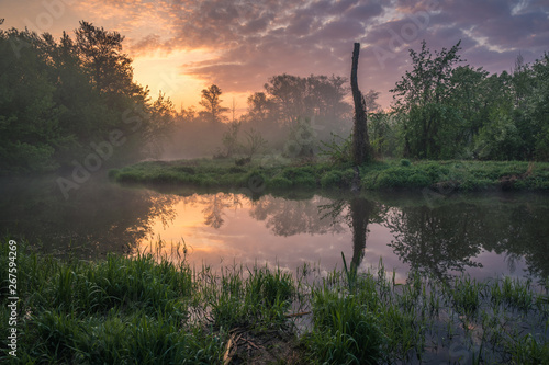 Photo sur Toile Saumon Sunrise over the Jeziorka River and the forest resembling the jungle near Piaseczno, Poland