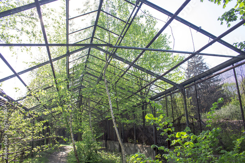 Tela The frame of an abandoned greenhouse filled with trees and shrubs