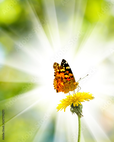Fotografie, Obraz  image of a flower and a butterfly in the summer garden