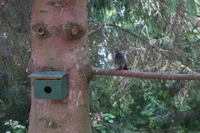 Pigeon Sitting On A Branch In ...