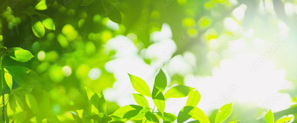 Fototapety, obrazy: earth day and freshness environment conversation concept with sunshine on beauty green leaves in springtime and summer season with soft focus and bokeh background