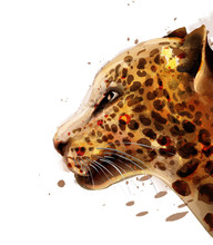Leopard Vector Watercolor. Colorful Detailed Illustration Wildlife Poster
