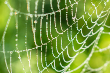 Drop of condensation on the spider-web. Gossamer with drops